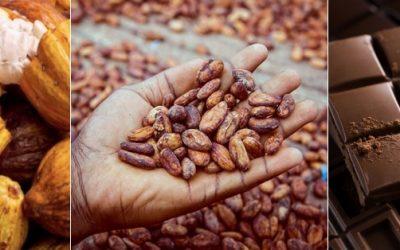 Quito tendrá su primer conversatorio internacional del Cacao & Chocolate, el futuro de la industria es ahora